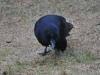 crow48